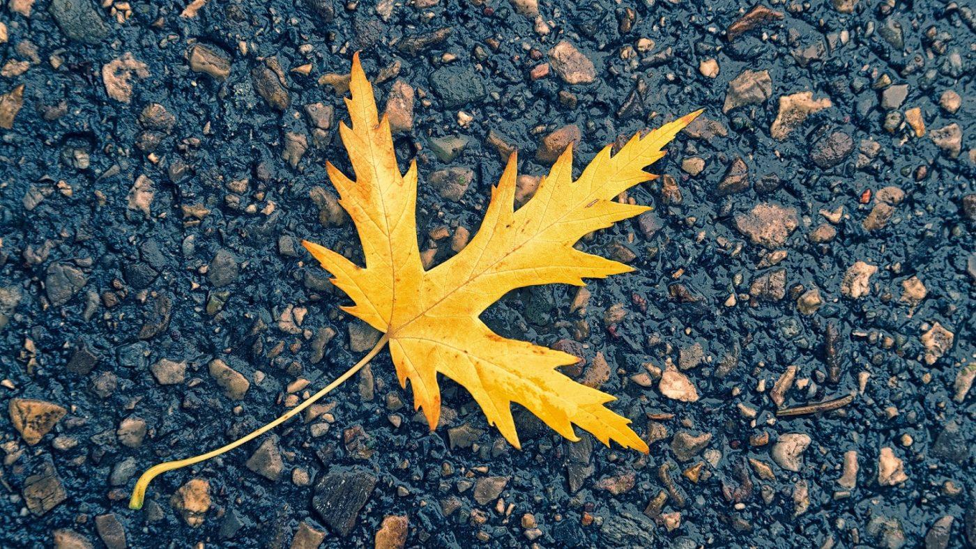 jesień, liść