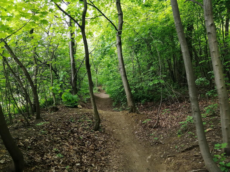 Góra Dorotka w Będzinie las