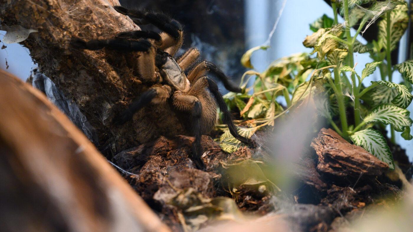 Wystawa pająków i skorpionów w Europie Centralnej
